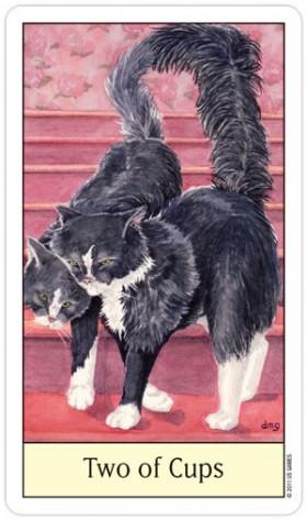Cat_2Cups